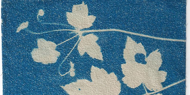 Cyanotype printing example by Sue Reno