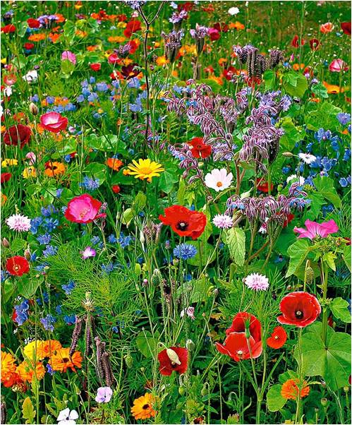 Wildflowers -- Colorful Quilts