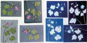 Cyanotype fabric before and after light exposure.