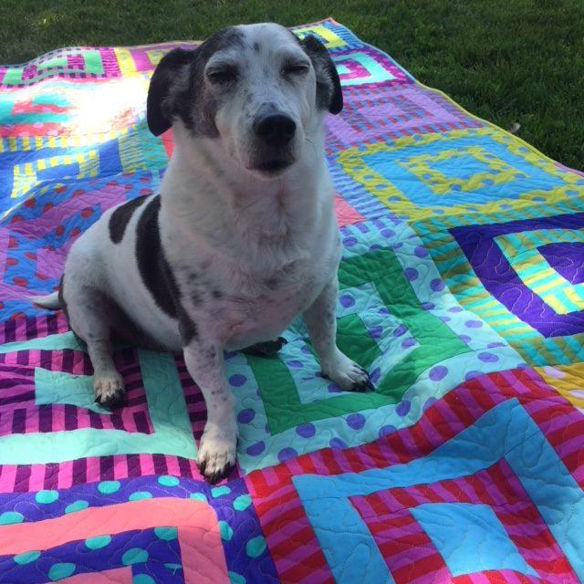 i-love-this-quilt-pom-pom-picnic-3-jasper-dozing