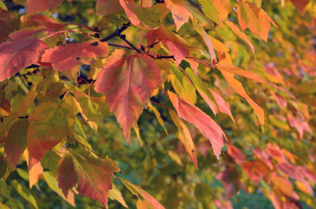 The bright oranges and yellows against a muted green background remind me of maple leaves at Halloween.